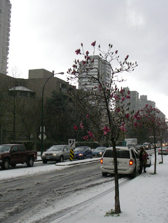 Blooming tree in the snow