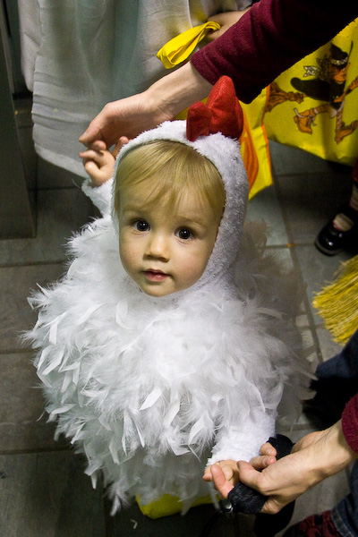 Cutest chicken…